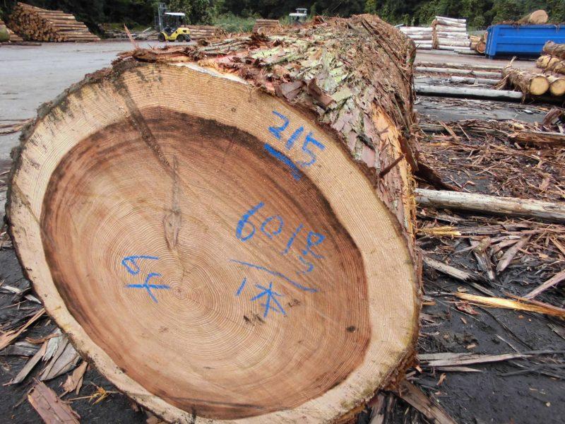 D様出材 杉 5m 64cm